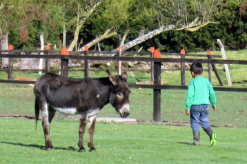 Little burro next to Santa Cruz