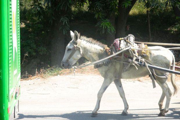 burro-bus