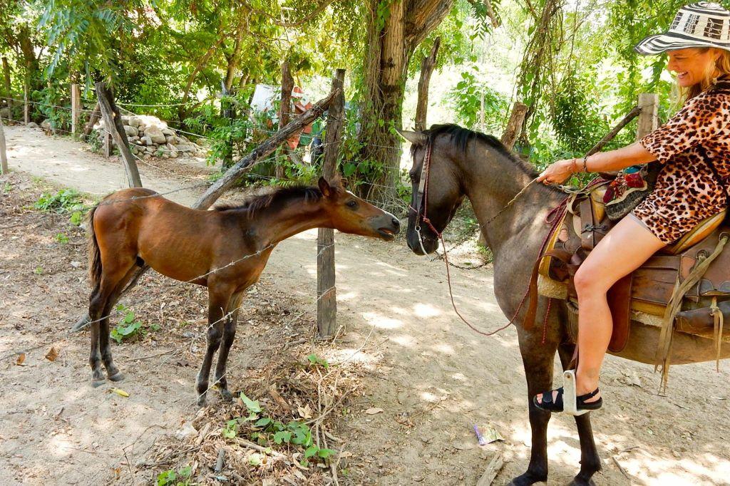 quimixto-babyhorse
